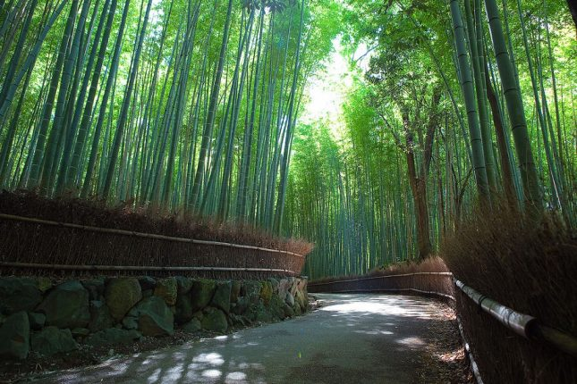 Las bambusowy Sagano